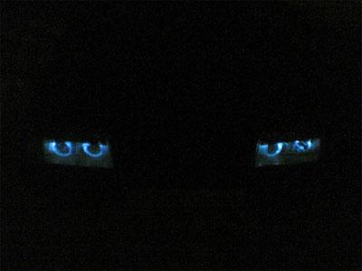 Ангельские глазки на автомобиле