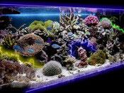 Оформление холодным неоном аквариума