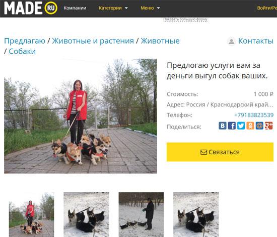 Выгул собак в Краснодарском крае