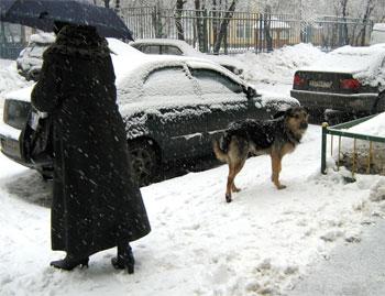 Зонтики зимой