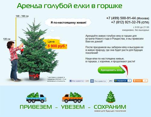 Экоелка - аренда голубой елки в горшке