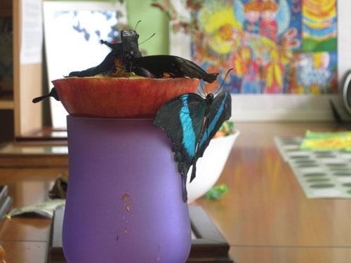 Живые бабочки на рюмке с яблоком