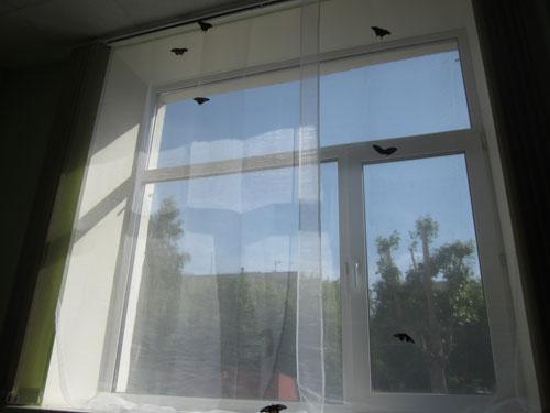 Живые бабочки на окне