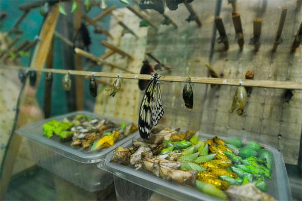 Дом бабочек во Владивостоке