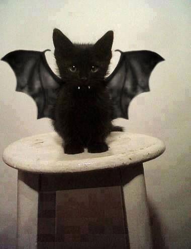 Костюм на Хэллоуин для кота