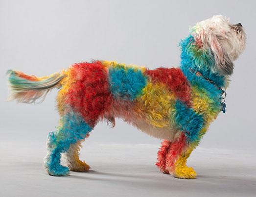 Окраска собак