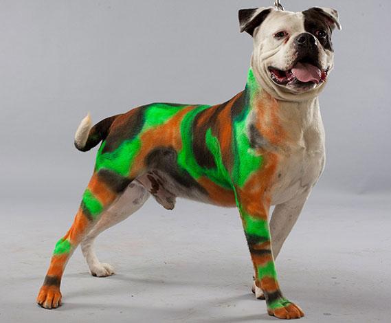 Краска для собак