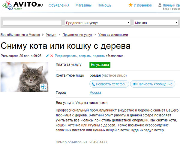 Служба спасения домашних животных в городе
