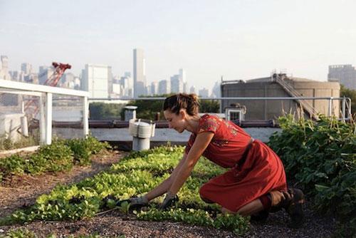 Огород на крыше в Африке