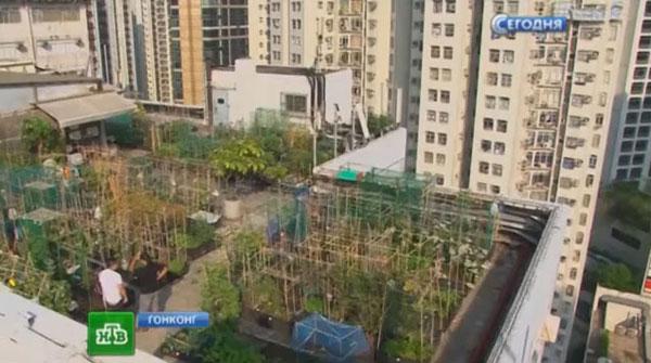 Огород на крыше небоскреба пока не очень прибыльное дело