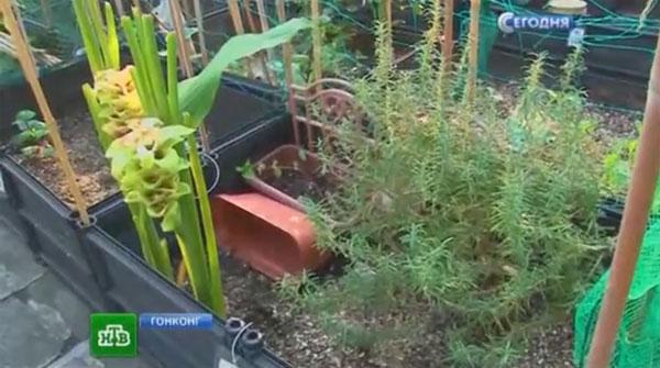 Индивидуальные огородные ящики с землей и растениями