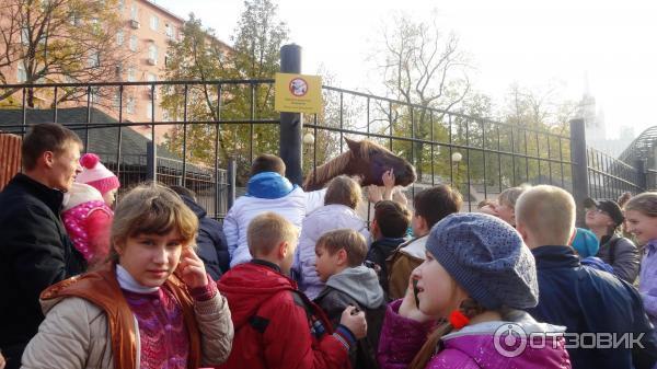 Толпа в московском зоопарке
