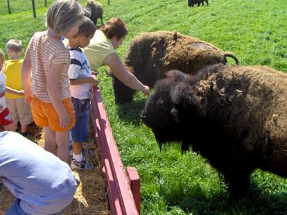 Культурная программа на бизоньей ферме