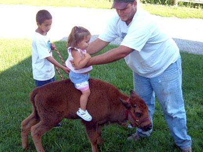 Детишек катают на бизончиках