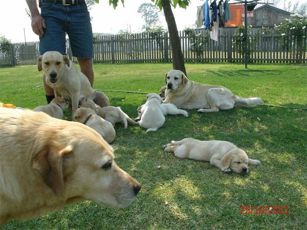 Курсы для собак на австралийской ферме
