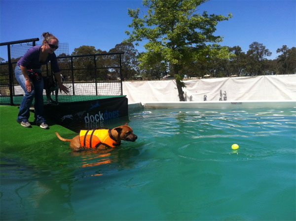Обучение собак-спасателей