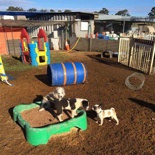 Детский сад для собак