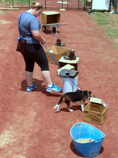 Курс по развитию нюха у собак