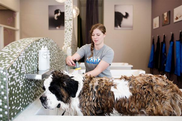 Можно поручить мытье собаки сотруднику мойки
