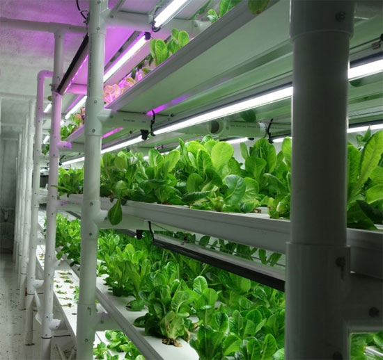 Ферма внутри контейнера