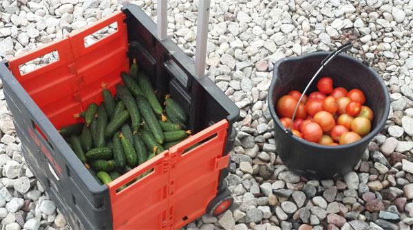 Экологические овощи