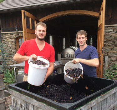 Вино из винограда делается на земле