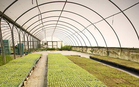 Теплицы для выращивания рассады