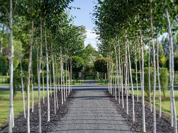 Парк из посаженных взрослых деревьев