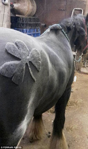 Художественная стрижка лошадей