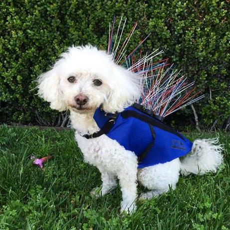 Защитная одежда для собак