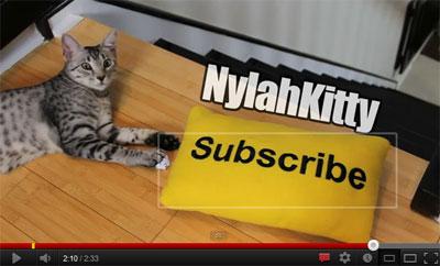 Как вставить в видео форму подписки на канал