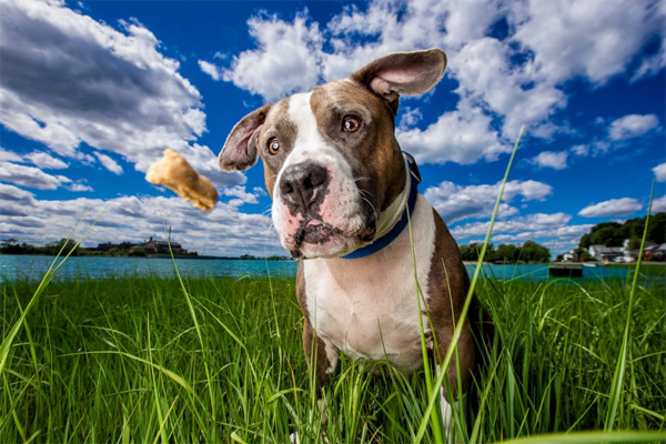 Собачий фотограф