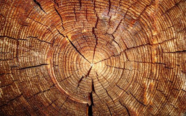 Деревья не умирают
