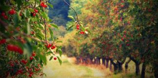 Возделывание сада по новой технологии