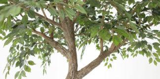 Сдача деревьев в аренду
