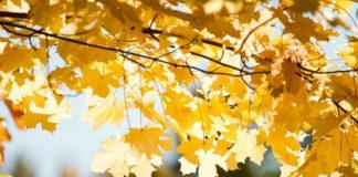 Погодный листок