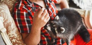 Прокат экзотических домашних животных