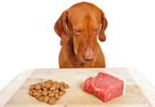Еда для собак