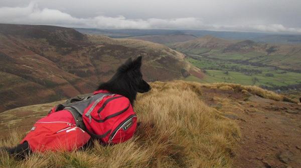 Прогулки с собаками в горах