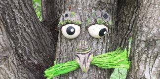Живое лицо дерева