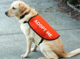 Информационные жилеты для собак