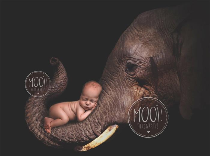 Фотография новорожденного со слоном