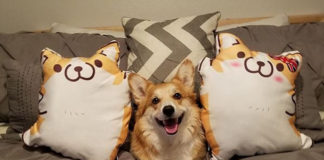 Какие подушки корги лучше продаются?