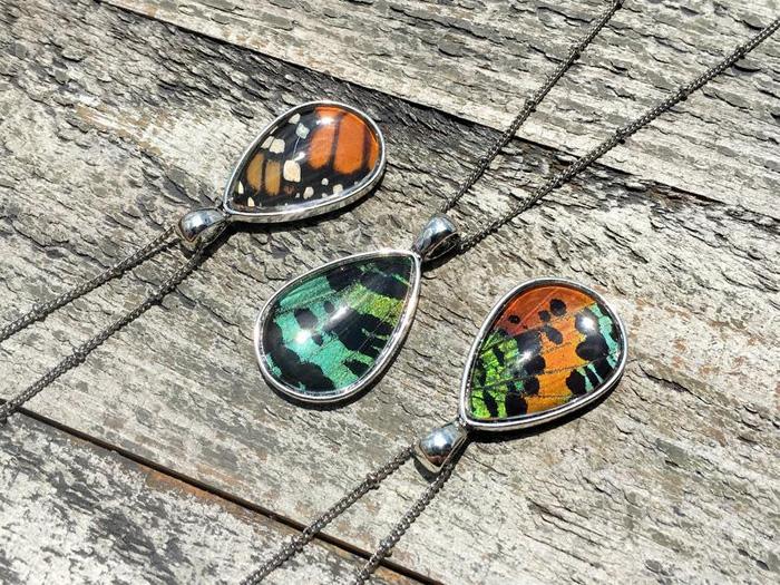 Узор крыльев бабочек