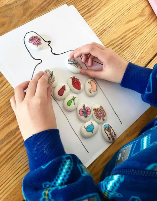 Набор камней для изучения анатомии человека
