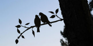 Птички из стали на ветке дерева