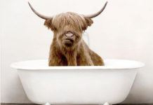 Корова в ванной - золотоносный принт