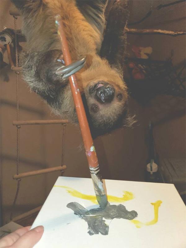 Рисунки ленивца