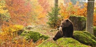 Медведь и кружка